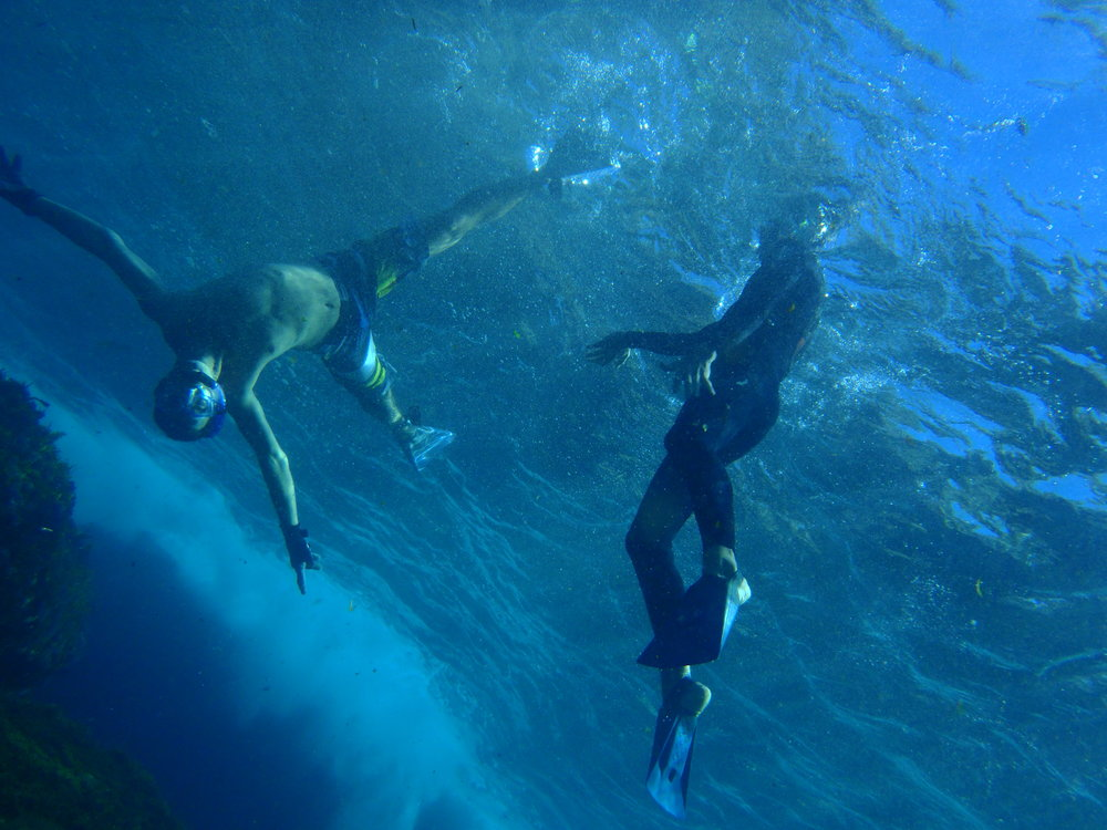 Snorkeling, Diving & Spearfishing   Experience Sydney Harbour
