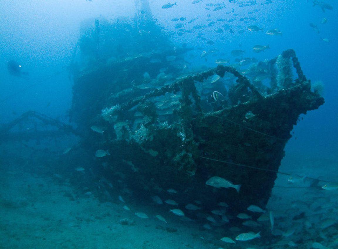 Snorkeling sydney harbour sunken ship